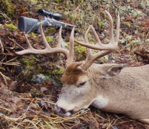 Best Scopes for Hunting