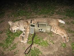 FoxPro Fury Electronic Predator Call