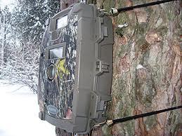 Trail Camera on a Tree