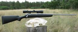 Coyote Hunting Rifle
