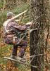 Climbing Tree Stands