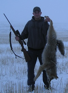 How to Coyote Hunt, Spot and Stalk
